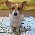 宅犬好滋味2.jpg