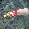 第二天~游泳4.jpg