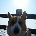 POKI-大太陽.jpg