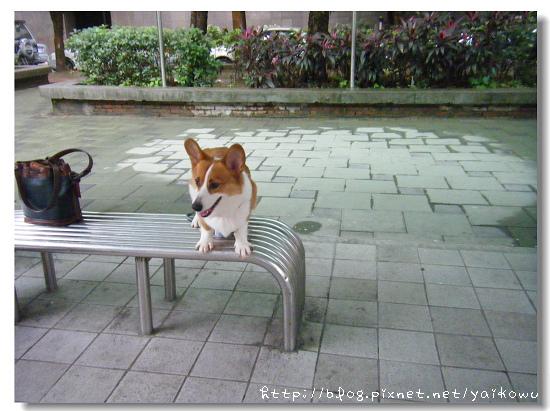 公園 慶祝.jpg
