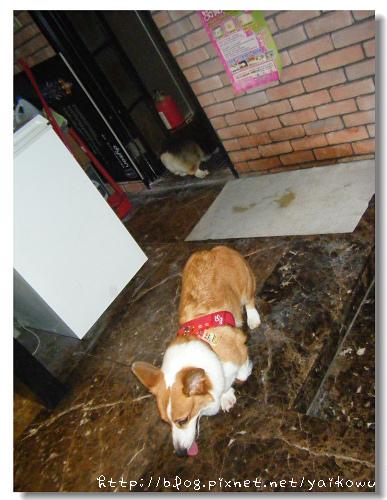 我的狗5.jpg