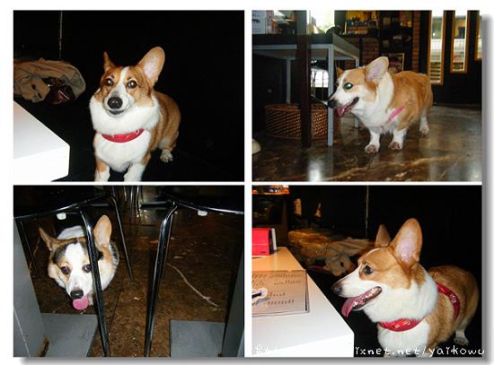 我的狗 3隻.jpg