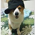 poki 戴大弟的帽子.jpg