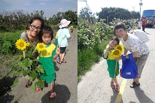 農作體驗-採向日葵