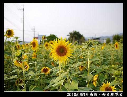 P1030362.jpg