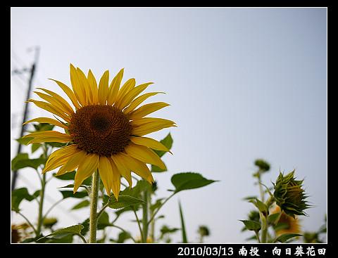 P1030394.jpg