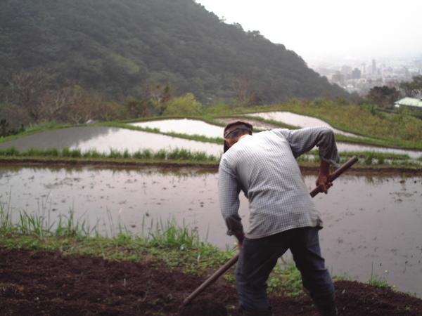 半嶺水稻準備 035.jpg