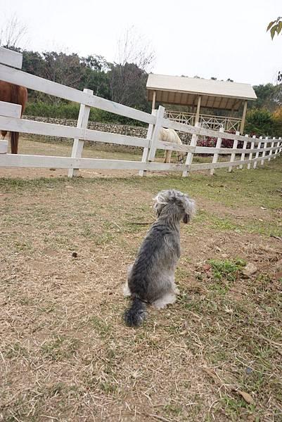 帶著狗狗玩苗栗 vilavilla魔法莊園
