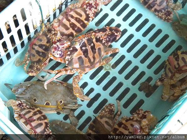 螃蟹一呀爪八個。