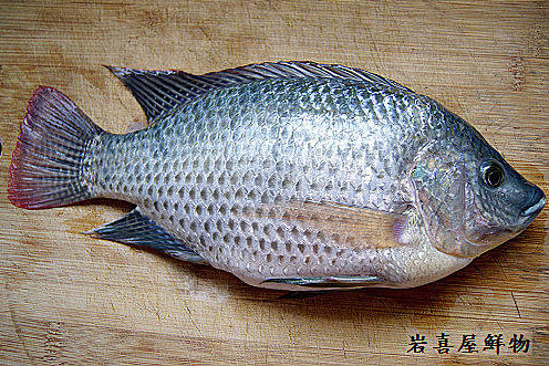 台灣鯛.jpg