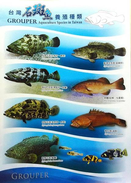 台灣石斑魚養殖種類