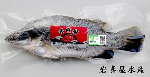 產銷金目鱸魚