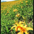 nEO_IMG_P1020081.jpg