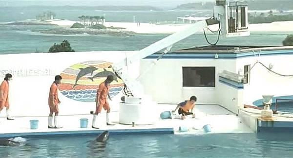 Dolphin Blue01.jpg