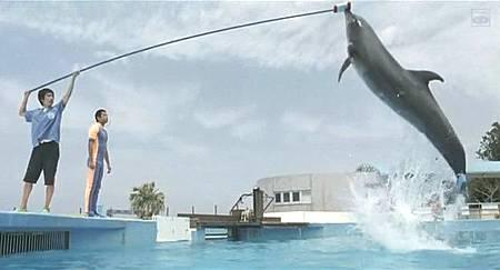 Dolphin Blue04.jpg