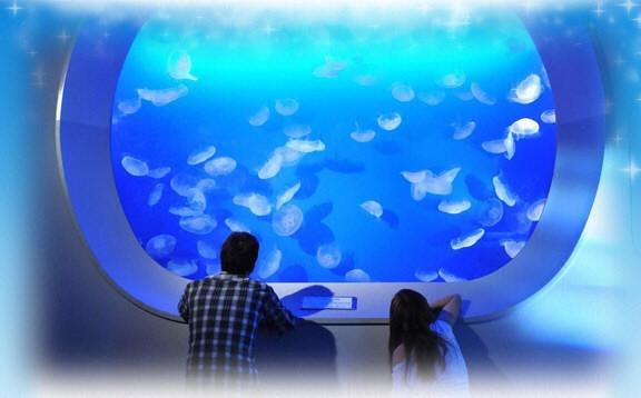 流星-江之島水族館-月海水母