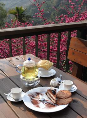 櫻花樹旁的午茶