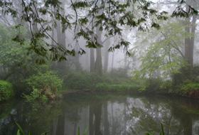 雨霧中的妹潭