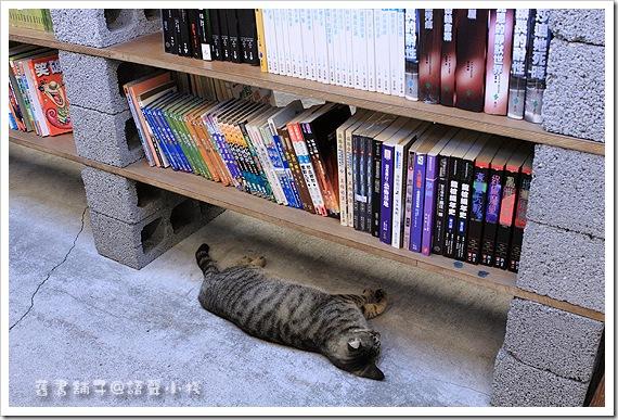 舊書舖子的貓兒