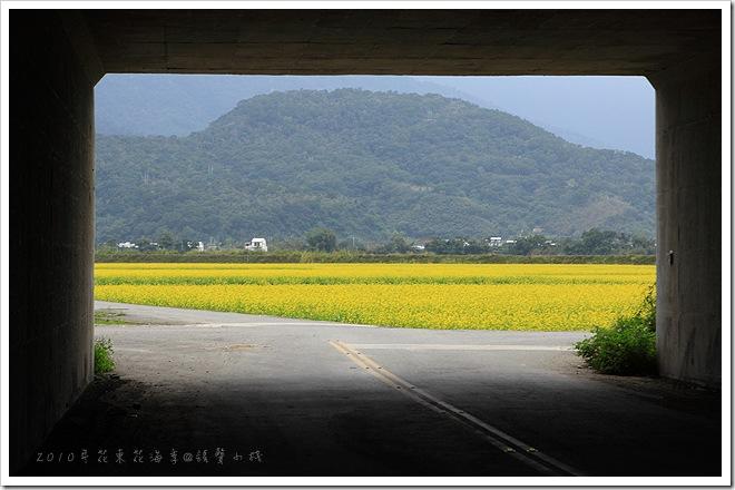 2010年花東花海季-東里