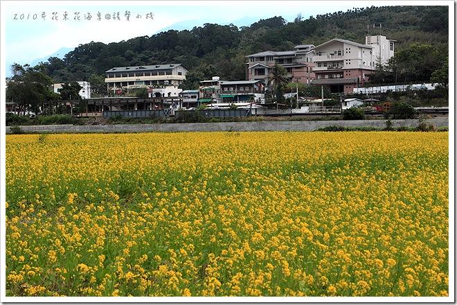 2010年花東花海季-富里