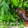 水瓶-YURI6.jpg