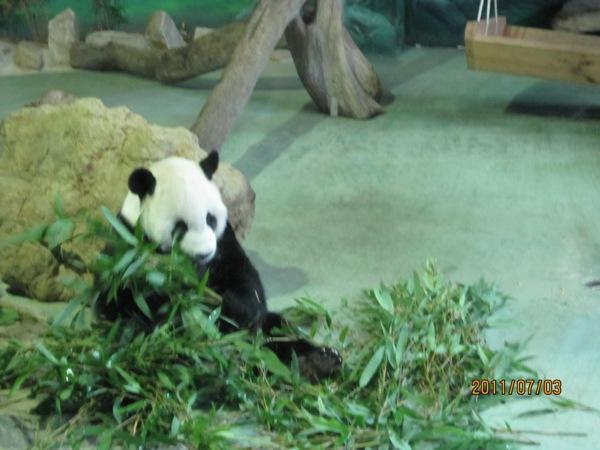 Taipei Zoo 20110703_7.JPG