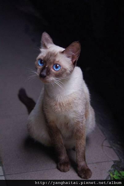 超美的藍眼睛