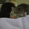 炒Q拍攝途中不支倒頭睡著