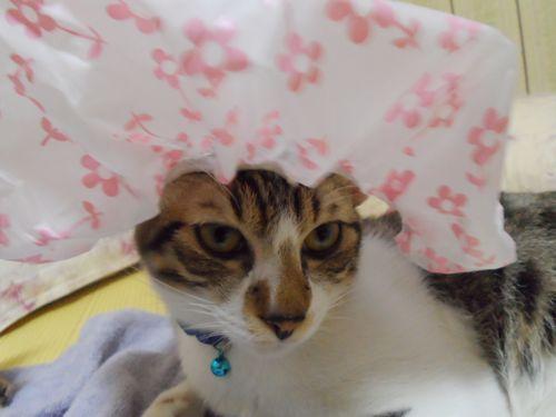 貓麻豆.jpg