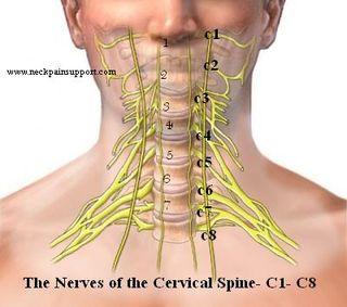 cervial spine.jpg