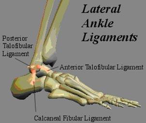 lateral ankle lig.jpg