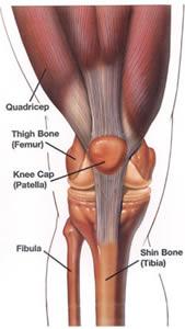 knee anatomy.jpg