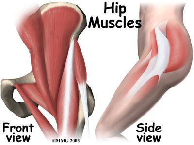 hip muscle.jpg