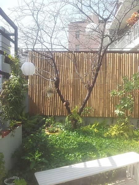 西區 茶庭桜院さくら-5