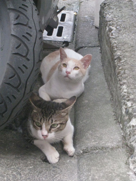 平溪的貓.jpg
