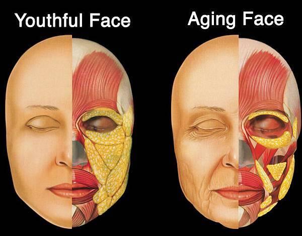 Fat-Aging