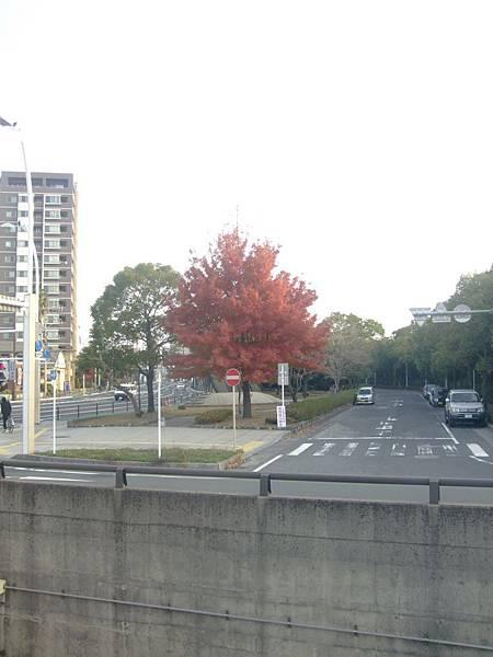 kagoshima (132).JPG