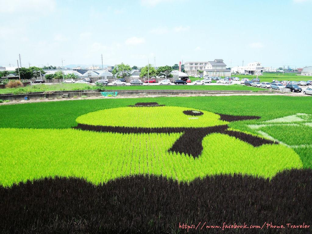 苑裡-彩繪稻田