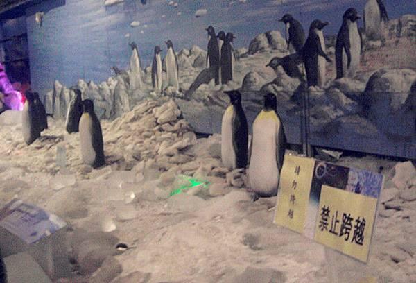 南北極地風光博覽會-企鵝群.jpg