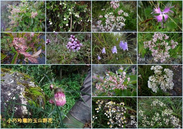 20101007~08登峰造極玉山行.jpg