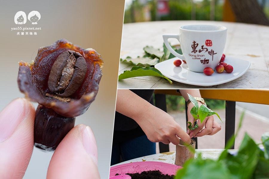 李子園小舖 龍眼包咖啡 喝咖啡 種咖啡樹