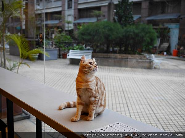 1454467824 2104601471 n - 【熱血採訪】台中西屯 黑水工廠,有性格店貓陪伴的巷弄音樂咖啡,非常適合愛貓一族前來,招牌司康搭配手工果醬相當合味
