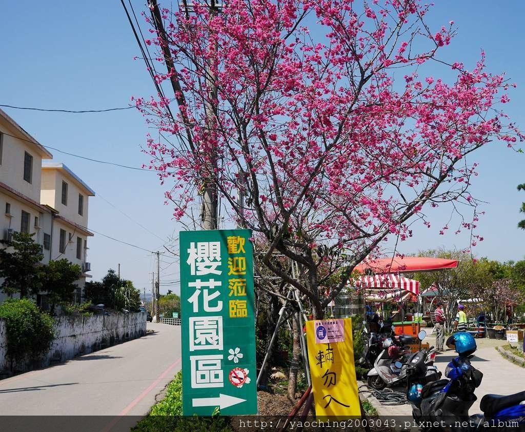 1551692542 876816974 - 台中烏日 溪尾櫻花林,櫻花季開跑囉,一同感受免費的粉色浪漫