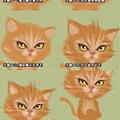 2011-11-27 抽煙的貓.jpg