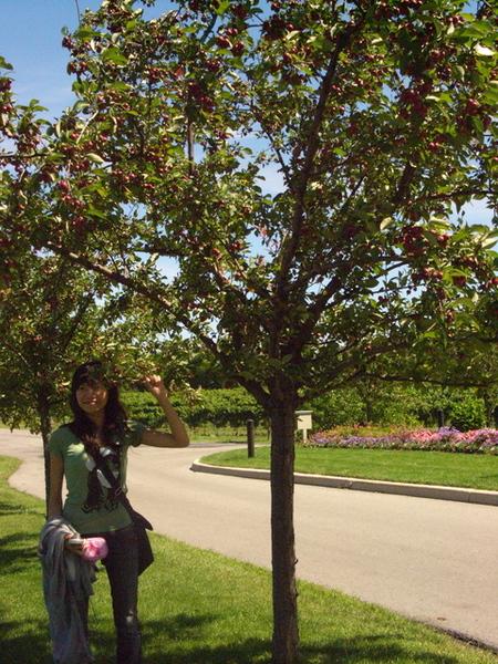樹上有果實