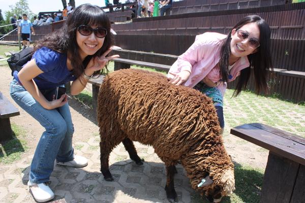 即使是黑黑的毛..也比國外不易親近的綿羊要可愛的多了..還是清境的羊可愛