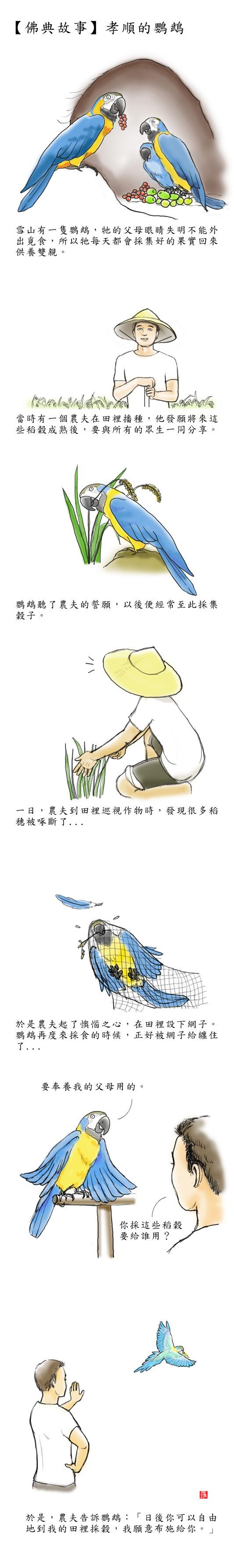 漫畫孝順的鸚鵡.jpg