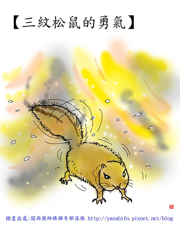 三紋松鼠的勇氣