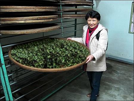 發酵與茶分類